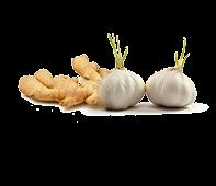 Ginger <b>& Garlic</b>